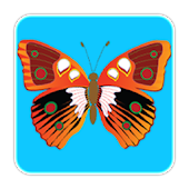Butterfly Game for Toddlers