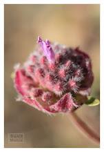 Photo: Eastern Sierras-20120717-660