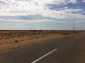 Photo: More cattle, no shepherd