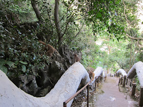 Photo: Following us up the stairway to the cave