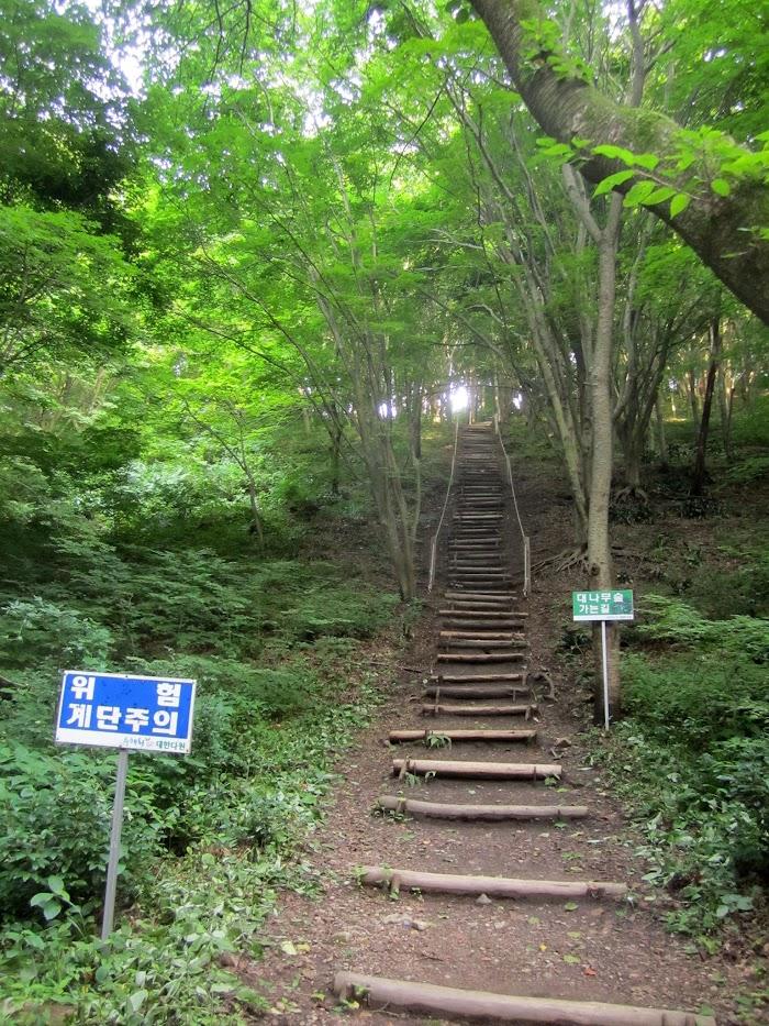 대나무숲 가는길