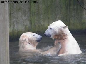 Photo: Eisbaerige Wasserspiele :-)