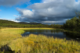 Photo: Marsh surrounding a small and shallow pond in Kvitdalen, Dovre mountains, Norway.