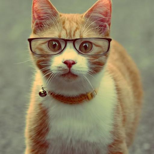 極客貓 Lwp 個人化 App LOGO-硬是要APP