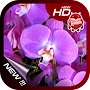 Valentine Flower Wallpaper APK icon