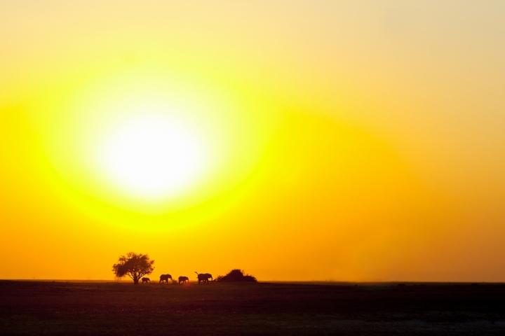 Elephants sunset di Charmer