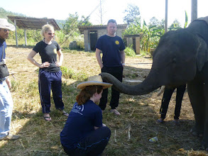 Photo: thank you mr elephant for putting my hat on for me
