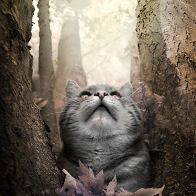 I love watching falling leaves by Alberto Ghizzi Panizza - Animals - Cats Portraits ( looking, cat, tree, autumn, leaves, portrait,  )