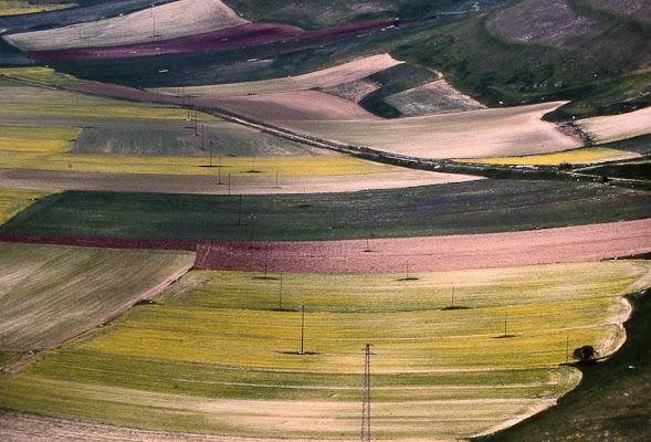 Fioritura al Pian grande di Fiorenza Aldo Photo