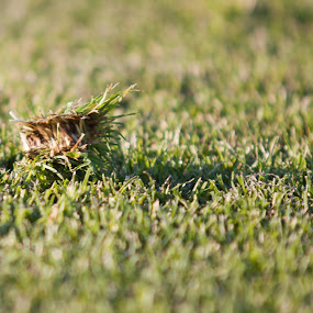Soccer field  by Rúnar Ingimarsson - Nature Up Close Leaves & Grasses ( iceland, football, grass, stadium, close up, soccer )