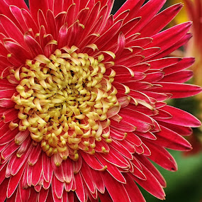 by Niney Azman - Nature Up Close Flowers - 2011-2013