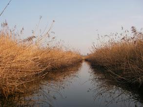 Photo: później kanałowo roślinnie