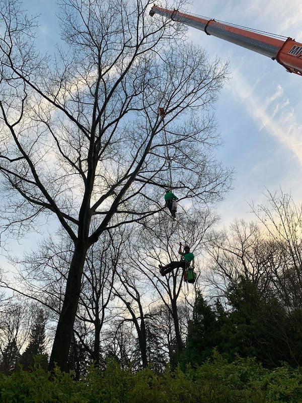 Dit is wat wij doen: moeilijk bereikbare bomen demonteren