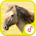 Best of Horse Sound Icon