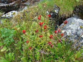 Photo: Wildflowers on Change Island.