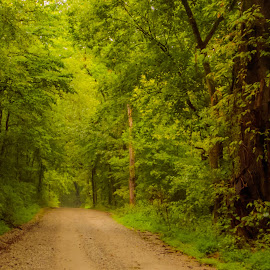 Off the Beaten Path by Jennifer  Loper  - Landscapes Forests ( forest, leaves, road, dirt, trees )