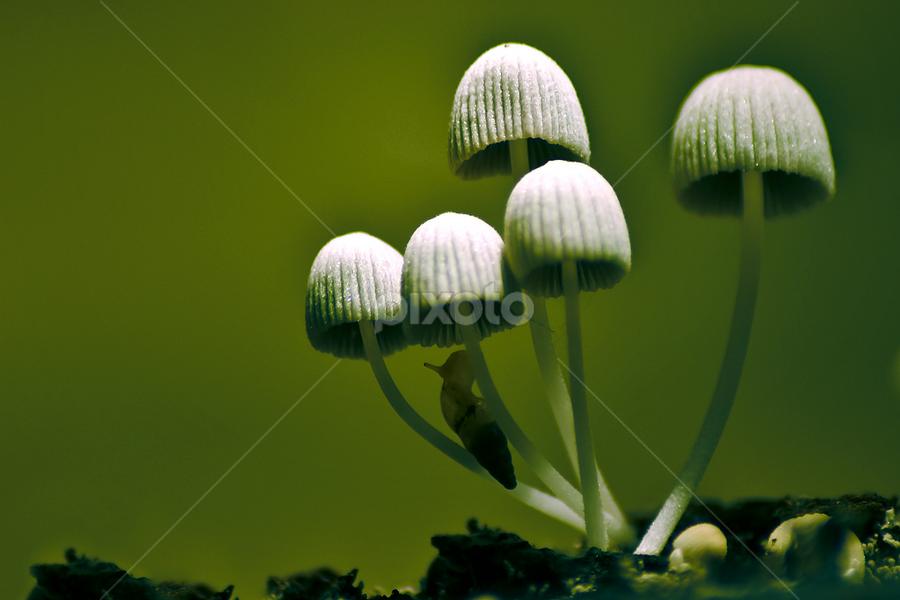 Mushrooms by Muhammad Buchari - Novices Only Macro