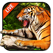 Tiger Live Wallpaper 2018