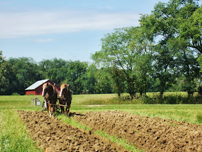 Photo: Two sorrel horses plowing a field in front of a red barn at Carriage Hill Metropark in Dayton, Ohio.
