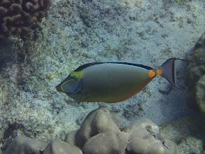 Photo: Hawaiian national fish - theHumuhumunukunukuapua'a fish (at Two Step).