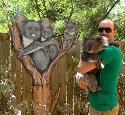 chi è il koala? di Modna