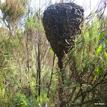 Photo: This ant nest should have a sign 'do not touch'