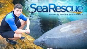 Sea Rescue With Matt Gutman thumbnail