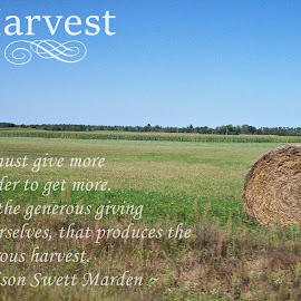 Harvest by Kasha Newsom - Typography Quotes & Sentences ( wisconsin, farmer, quotes, hay, illustration, harvest, typography )
