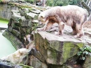 Photo: Gianna schwimmt - beobachtet von Knut ;-)