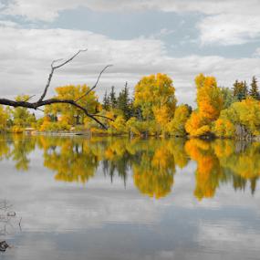 cheyenne by Mark Warick - Landscapes Prairies, Meadows & Fields
