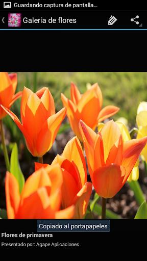 Flores de Primavera Apk 10 Download Only APK file for Android