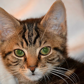 P.B. by Crystal Bailey - Animals - Cats Kittens