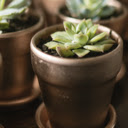Succulents New Tab Plants Theme