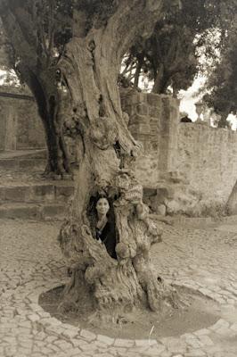 La strega dell'albero di Lory67