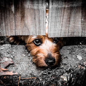 Nosey! by Aulander Skinner - Animals - Dogs Portraits ( natural light, pups, playful, dogs, joy, contest, cute, natural background, puppies, adorable dogs, nature, pets, mamal, baby, animal, reflections digital media, animalia, young, portrait, photos, canine, vertebra, joyful, resting, animal kingdom, pet, laying, zoology, puppy, rest, dog, companion dog, #GARYFONGPETS, #SHOWUSYOURPETS,  )
