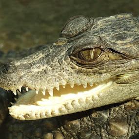 KEEP SMILING by Chhaditya Parikh - Animals Reptiles