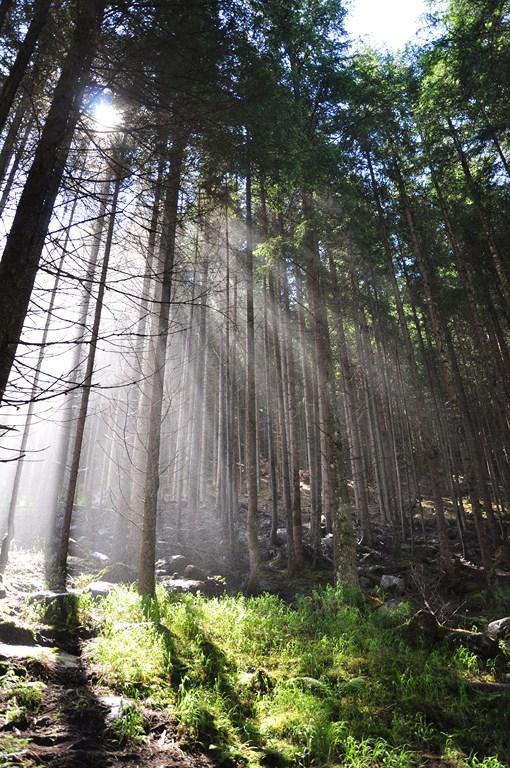 Il segreto del bosco di sabi49