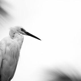 by Christy Abraham - Animals Birds