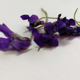 Lillies by Sibi Sibi - Flowers Flower Arangements ( #purple, #spring flower, #petals, #lilly, #flowers,  )
