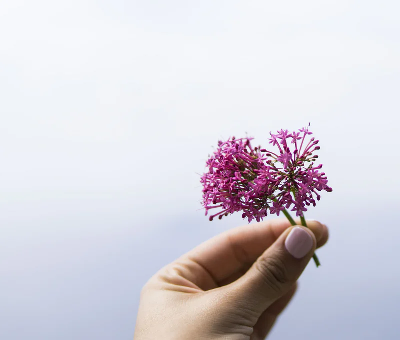 Valerian and high blood pressure medication (A brief guide)