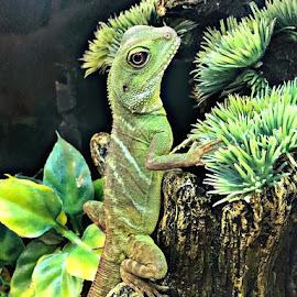 by Heidi George - Animals Reptiles