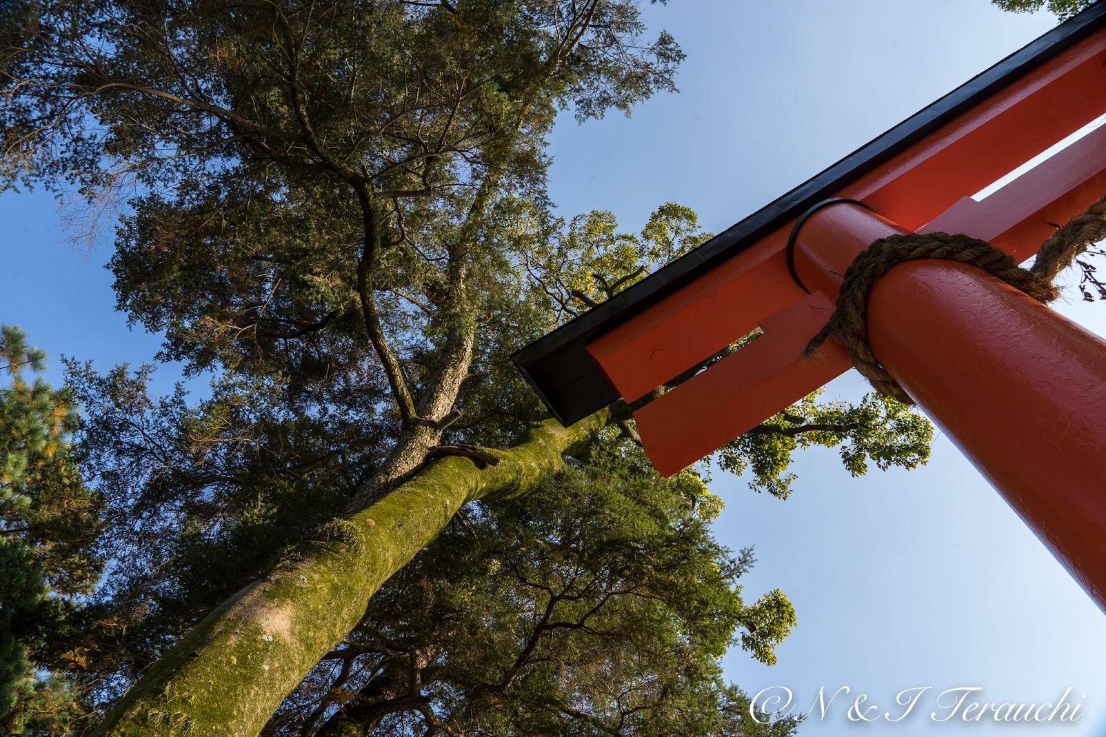鳥居に寄り添う樹木