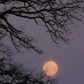 Full Moon & Tree Branches by Bill Diller - Landscapes Forests ( full moon, forest, michigan, nature, tree, tree branches, tranquil, trees, peaceful, calm, moon, calmness, tranquility )