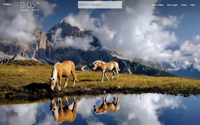 Horses Wallpapers New Tab Background