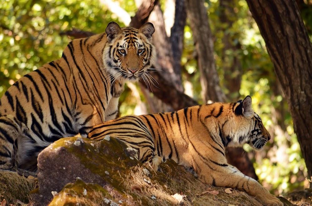 top-10-biosphere-reserves-india--Pachmarhi_valley_Madhya_Pradesh_Image