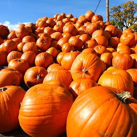 A Plethora of Pumpkins! by Campbell McCubbin - Public Holidays Halloween ( orange, autumn, fall, pumpkins, october, halloween,  )