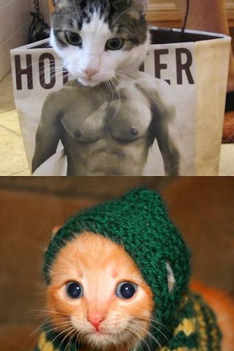 有趣的猫图片