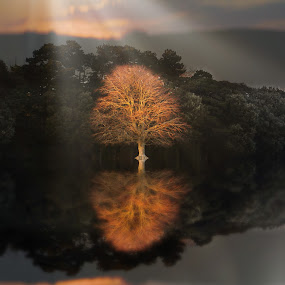 Sunkissed by Una Williams Photos - Landscapes Forests ( reflection, sky, waterscape, trees, sun )