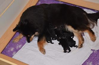 Photo: Så tror madmor at jeg er færdig, så hun har skiftet tæpper. 5 fine hanner og 1 pige det skal nok blive sjovt.
