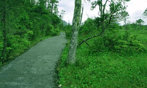 トンガス国有林